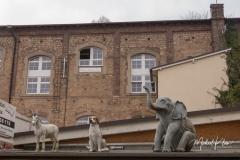 IMG_8733_Kirn-Sulzbach_20190324
